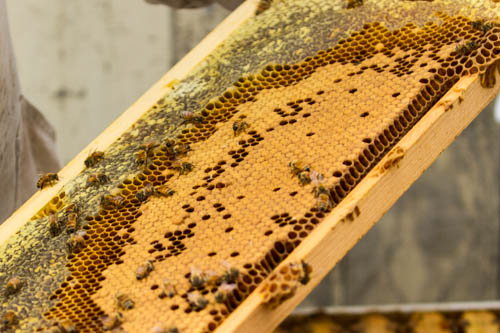uniform brood pattern with honey on the outside