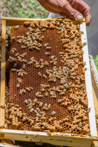 lots of drone comb can waste hive energy by rearing bees that dont work