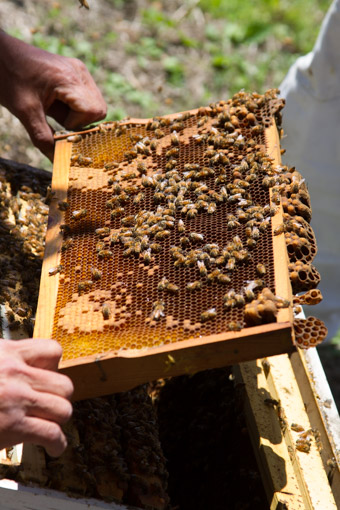 when a frame is too small or has too much bee space they will build rogue comb underneath it