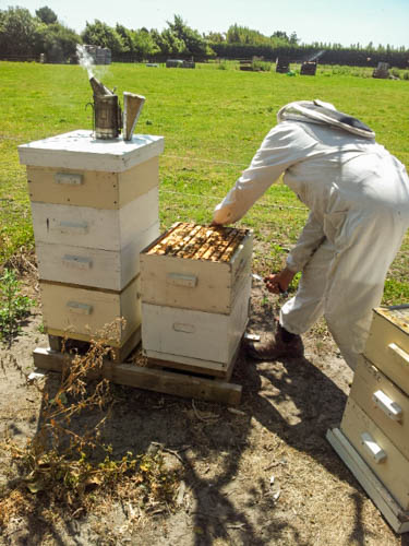 working hive quickley to reduce robbing