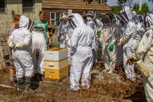 breaking the hive apart for inspection