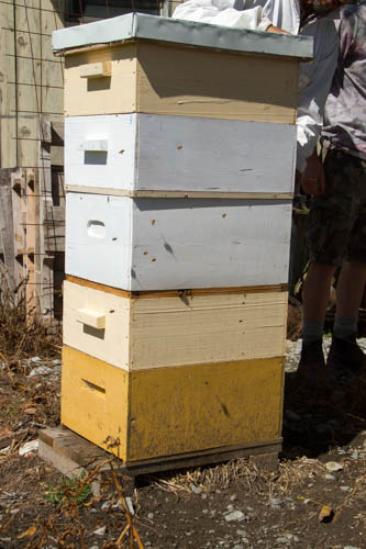 a split hive, 2 colonies separated by a board in the same stack