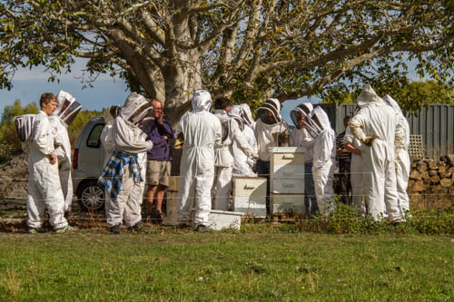 Beekeeping members around the club hives