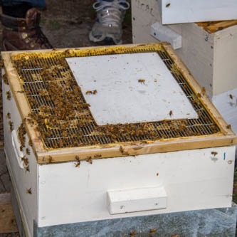 a thin board on top of the queen excluder to let the bees cluster with the queen