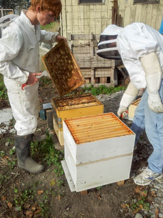 seperating the 2 hives that had been in the same stack