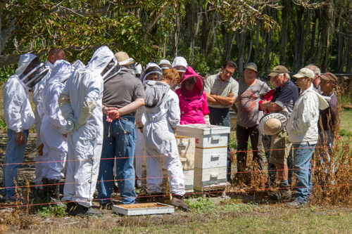 beekeepers crowed round an open hive