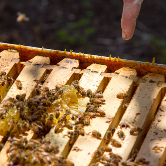Pointing out a massive top rebate in the brood box that causes excessive wax buildup