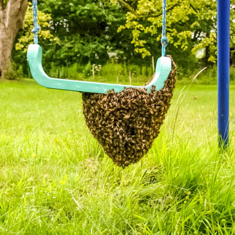 swarm on a playground swing