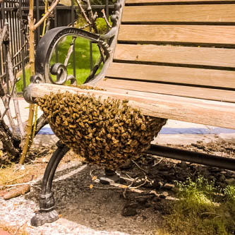 swarm on a park bench